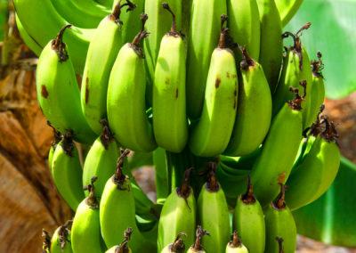 bananas-kg300